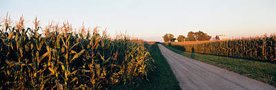 Dirt Road Passing Through Fields Poster by Panoramic Images