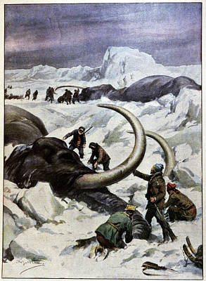 Discovery Of Frozen Mammoths Poster