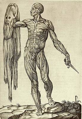 Dissected Cadaver With Flayed Skin Poster by National Library Of Medicine