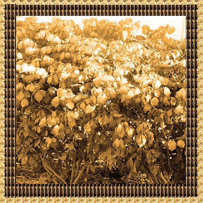 Diva Gold Collection Flowers Exquisite Double Color Border Energy Filled Sparkle Decorative Art Poster