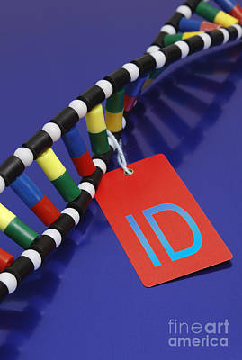 Dna Double Helix, Id Tag Poster by GIPhotoStock