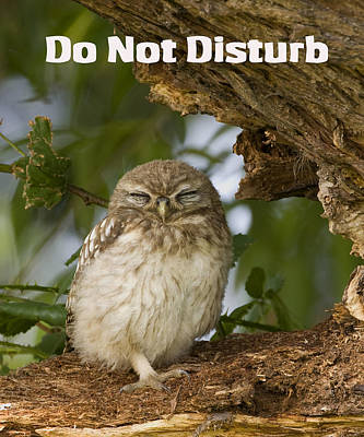 Do Not Disturb Poster by Paul Scoullar