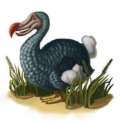 Dodo Bird Poster by Spencer Sutton