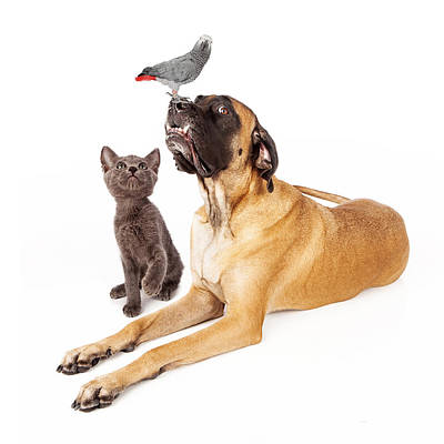 Dog And Cat Looking At A Bird Poster