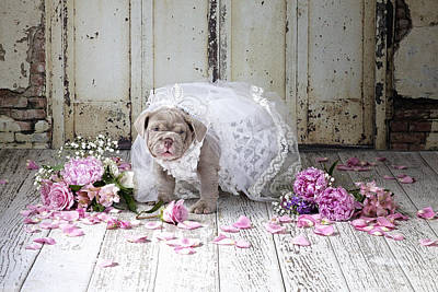 Dog Bride Poster by Lisa Jane