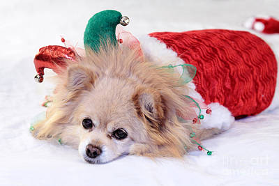 Dog In Christmas Costume Poster