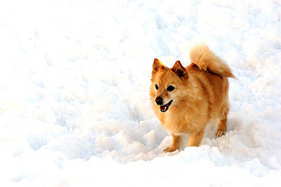 Dog In Snow Poster