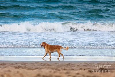 Dog Poster by Juan  Silva
