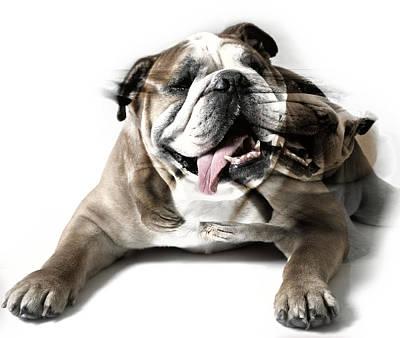 Dog Mastiff Poster by Evgeniy Lankin