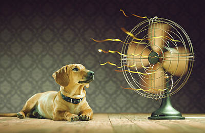 Dog Next To Electric Fan Poster