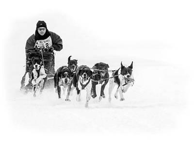 Dog Sled Team Poster