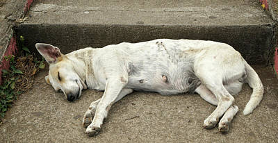 Dog Sleeping, Catarina, Masaya Poster by Panoramic Images