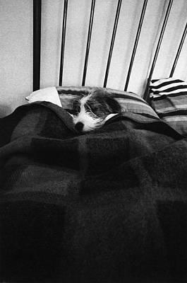 Dog Sleeping Poster