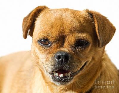 Doggy Portrait Poster
