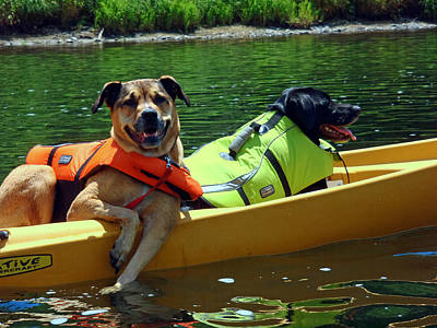 Dogs In A Kayak Poster