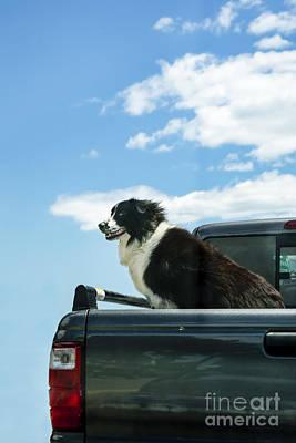 Dogs Love Trucks Poster by Diane Diederich