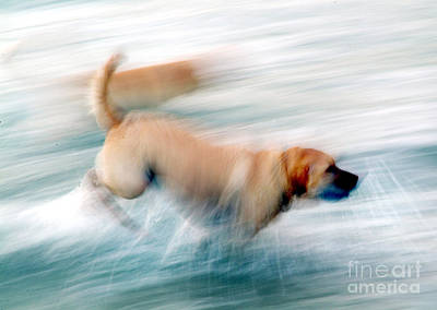 Dogs Running In Sea. Poster