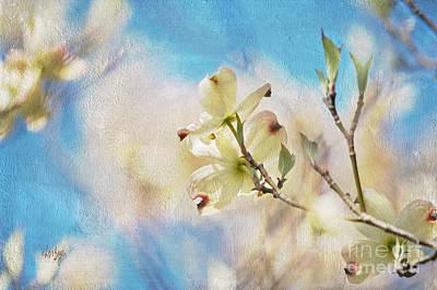 Dogwood Against Blue Sky Poster by Lois Bryan