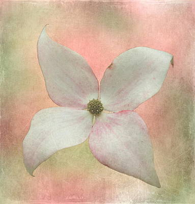 Dogwood Blossom Poster by Angie Vogel