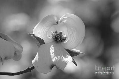 Poster featuring the photograph Dogwood Blossom by Tannis  Baldwin