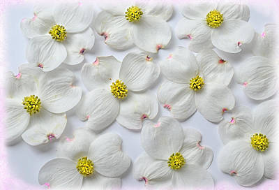 Dogwood Season Number Three Poster by Lena Wilhite