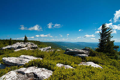 Dolly Sods Poster by Shane Holsclaw