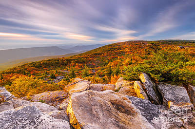 Dolly Sods Wilderness D30019853 Poster by Kevin Funk