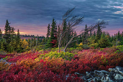 Dolly Sods Windswept Sunset Poster by Mary Almond