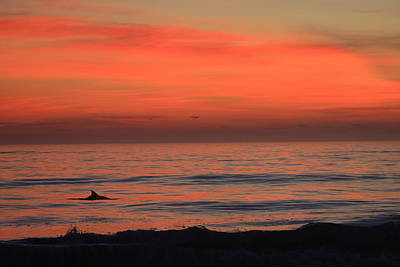 Dolphin At Cape Hatteras Poster by Mountains to the Sea Photo