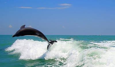 Dolphin Flip 2 Poster by Kara  Stewart