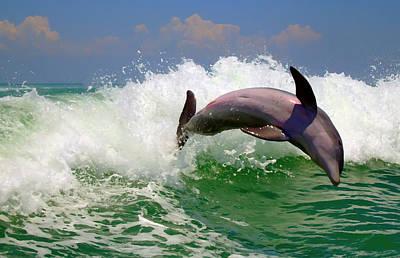 Dolphin Flip Poster by Kara  Stewart