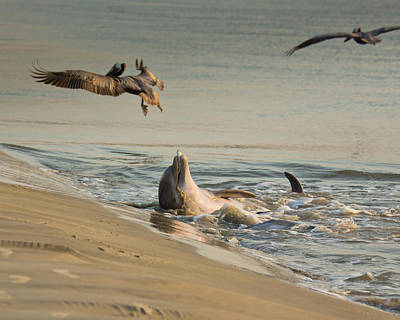 Poster featuring the photograph Dolphin Joy by Patricia Schaefer