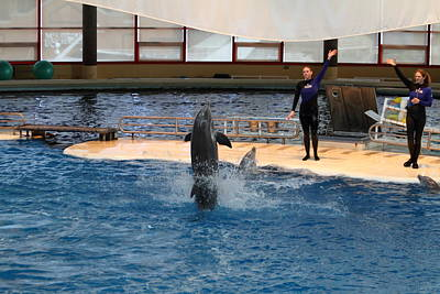 Dolphin Show - National Aquarium In Baltimore Md - 1212101 Poster by DC Photographer