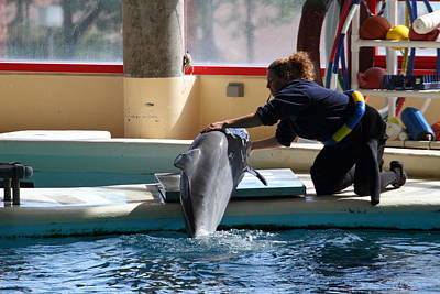 Dolphin Show - National Aquarium In Baltimore Md - 1212109 Poster by DC Photographer