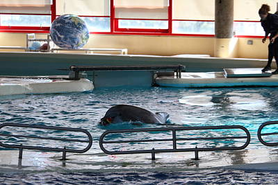 Dolphin Show - National Aquarium In Baltimore Md - 1212113 Poster by DC Photographer
