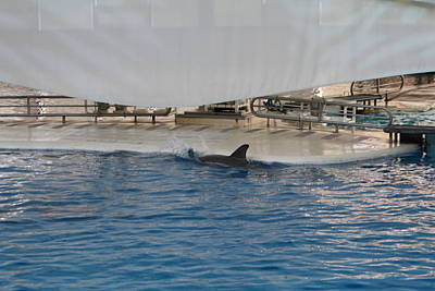 Dolphin Show - National Aquarium In Baltimore Md - 1212118 Poster by DC Photographer