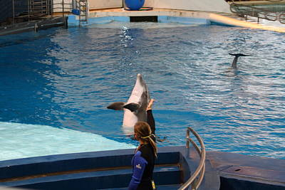 Dolphin Show - National Aquarium In Baltimore Md - 1212144 Poster