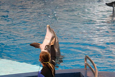 Dolphin Show - National Aquarium In Baltimore Md - 1212147 Poster