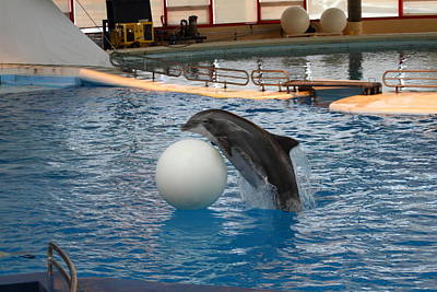 Dolphin Show - National Aquarium In Baltimore Md - 1212158 Poster