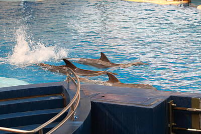 Dolphin Show - National Aquarium In Baltimore Md - 1212185 Poster