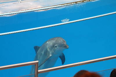 Dolphin Show - National Aquarium In Baltimore Md - 1212192 Poster by DC Photographer