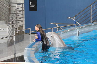 Dolphin Show - National Aquarium In Baltimore Md - 1212222 Poster by DC Photographer
