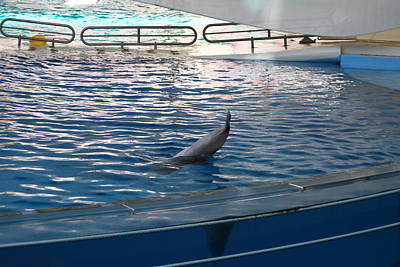 Dolphin Show - National Aquarium In Baltimore Md - 121223 Poster by DC Photographer