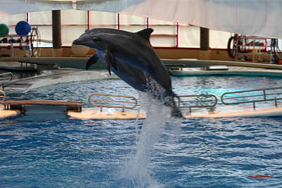 Dolphin Show - National Aquarium In Baltimore Md - 1212248 Poster by DC Photographer