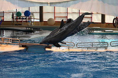 Dolphin Show - National Aquarium In Baltimore Md - 1212251 Poster by DC Photographer