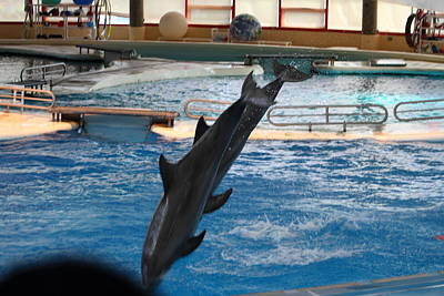 Dolphin Show - National Aquarium In Baltimore Md - 1212253 Poster by DC Photographer