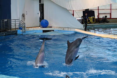 Dolphin Show - National Aquarium In Baltimore Md - 1212261 Poster by DC Photographer