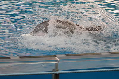 Dolphin Show - National Aquarium In Baltimore Md - 121249 Poster