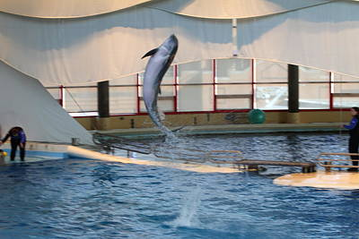 Dolphin Show - National Aquarium In Baltimore Md - 121253 Poster