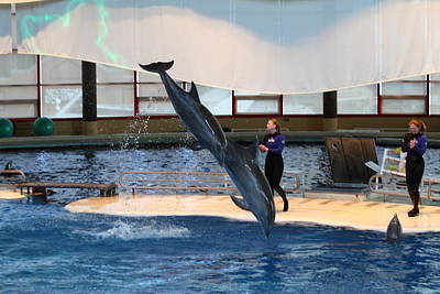 Dolphin Show - National Aquarium In Baltimore Md - 121295 Poster